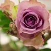 Bloemen in de DigiShop