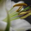 Bloemen Digishop-3
