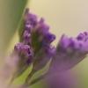 Bloemen Digishop