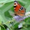 vlinder 2 flitssite