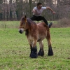 paard+atleet
